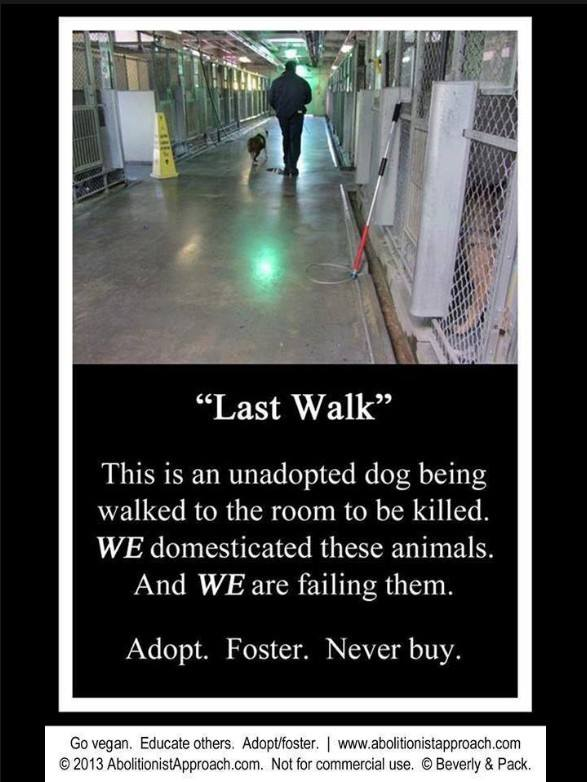 vegan_adopt.jpg